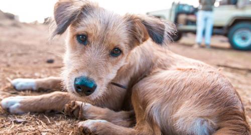 Scruffy - the Ekorian camp dog!