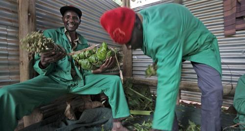 Mara plantation workers