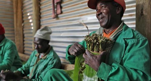 Khat plantation workers