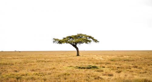 The 'sundowner tree', Mugie's iconic acacia