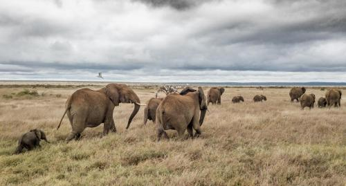 Herd of elephants retreating in the coming rains