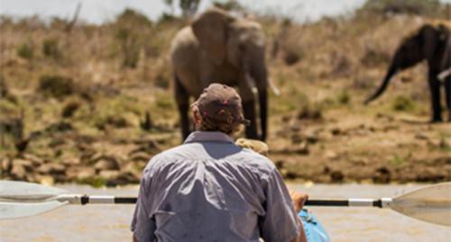 Kayaking with elephants